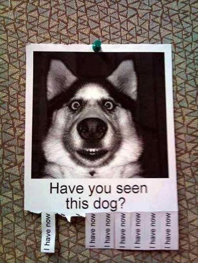 Funny Missing Dog Picture